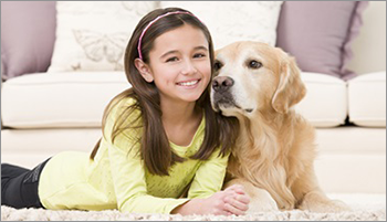 pet stain and urine removal service